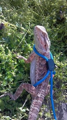 I want to get a leash like this when Puff is old enough. It would be sooo fun to bring him to the mall !!!