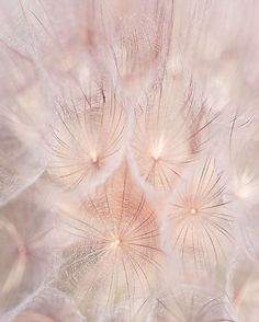 Dandelions & the sun - #smk #inspiration #softness #pinkpower #summer #ss18 #에스엠케이 #영감 #핀크