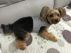 Houndstooth  Dog Harness Custom Made by graciespawprints on Etsy