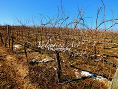 A personal favorite from my Etsy shop https://www.etsy.com/listing/225586215/field-of-winter-grape-vines-ii-virginia
