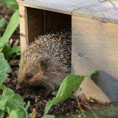 Making a hedgehog feeding station