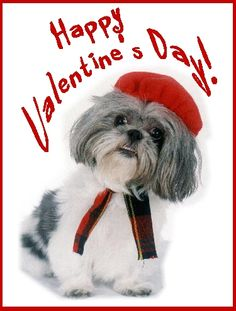 happy valentines day dog images