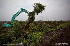 Some of the world's biggest palm oil companies have suspended their forest destruction. Is this a ceasefire or the end of their war on forests?