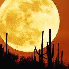 Cactus Moon silhouette