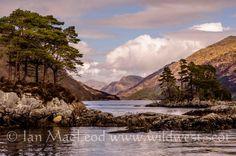 Looking north along Loch Shiel from Gaskan