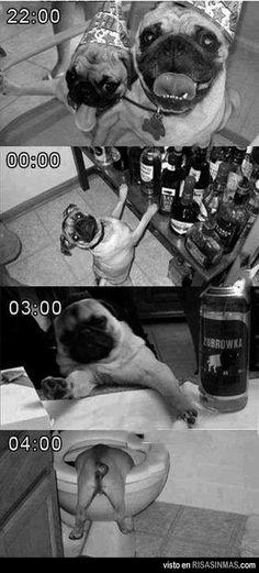 Una fiesta de perros.