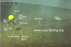 TB Rig for carp fishing rigs