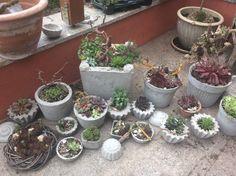 Plants, Succulents, Garten, Flora, Plant, Planting
