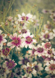 flowers/flower meadow || fiori/prato in fiore || fleurs/prairie fleurie
