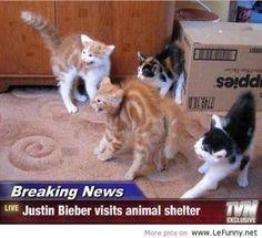 Justin Bieber visits an animal shelter.