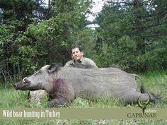 Wild boar hunting in Turkey Wild Boar Hunting, Bow Hunting, Wild Animals, Safari, Turkey, Nature, Outdoor, Outdoors, Naturaleza