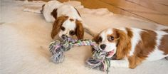 Weird Business: Refurbish and Sell Used Pet Toys | The Penny Hoarder
