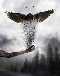 Photo manipulation is not only about transforming or altering a photograph using various methods and techniques, it can be considered as an art form because it Dark Fantasy Art, Fantasy Artwork, Dark Art, Gif Kunst, Creative Photography, Art Photography, Photography Wallpapers, Cute Gifs, Tatoo Art