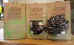 grocycle mushrooms