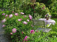 Эффектно украшают сад похожие на блюдца цветки сорта Bowl of Beauty с большим…