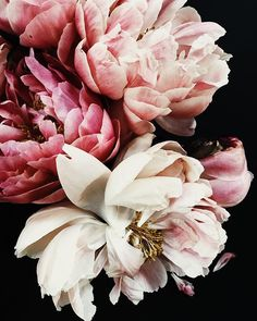 Iluka House – Gardening for beginners and gardening ideas tips kids Pink Flowers, Beautiful Flowers, Pink Peonies, Peony, Beautiful Pictures, Flowers Wallpaper, Poster Photo, Floral Photography, Flower Aesthetic