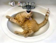 So how much more does a cat have to do around here to make you realise i need a drink!! :-)
