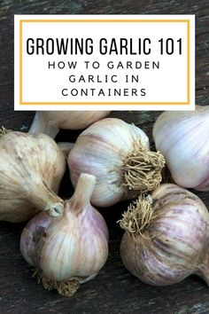 I'm the kind of person who thinks that garlic goes great on EVERYTHING. One could rightfully assume that this means I had To figure out how to grow a garlic plant in a container by myself! It's easier than you might think! Pick a pot with lots of drainage, and one that is at least … Read More