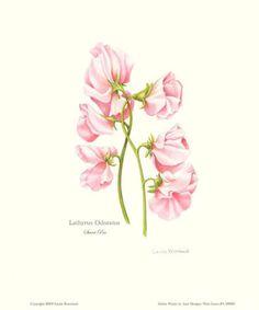 Sweet Pea, Karissa's birth month flower