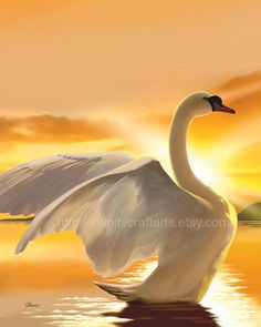 Majestic Swan White swan on a lake Swan on by InfinityCraftArts