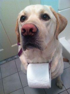 Fundstück aus dem Internet #Hund #cute #job