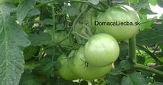 Green Tomatoes: Beyond the Frying Pan Green Tomatoes, Feet Care, Omega 3, Harvest, Vegetables, Fruit, Health, Nordic Interior, Southern Living