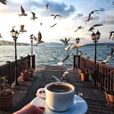 Would love to have a cup of coffee on the beach with my fam!