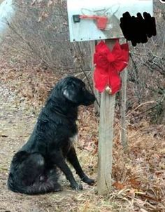 """Loyal dog waited four days at mailbox for owner to return	"""