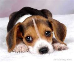 talk about puppy dog eyes