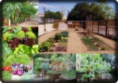 Horticultura: Huerto ecológico y maceto-huerto urbano.: Bienvenidos a huerto ecológico y maceto-huerto urb...