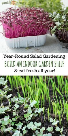 Edible garden 8585055517545423 - How to Build an Indoor Garden Shelf and grow fresh food indoors all year Source by BeckySears Indoor Vegetable Gardening, Organic Gardening, Gardening Tips, Gardening Quotes, Gardening Vegetables, Kitchen Gardening, Container Gardening, Indoor Hydroponic Gardening, Organic Vegetables