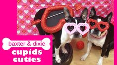 For permission to use contact bossyterriers@yahoo.com Baxter & Dixie wish you a very happy valentines day.