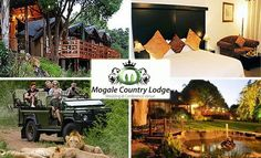 Experience the Ultimate Bush Escape at Mogale Country Lodge