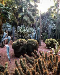 CACTUS MOMENT !!!! #jardindemajorelle #ivessaintlaurent #marrakech #gardens #captus #majorrelleblue