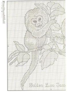 baby-golden-lion-tamrin-2.jpg 798×1,095 pixels