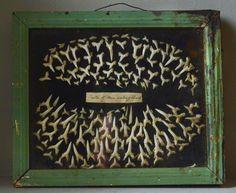 seaweed and shark teeth (via Bloglovin.com )