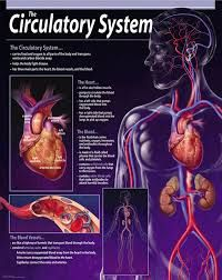 Image result for vocab games for circulatory system
