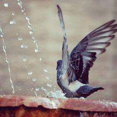 "@79jotaeme's photo: ""La #Libertad de volar"""