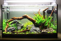 // Goldfish Aquarium, Goldfish Tank, Aquarium Setup, Aquarium Design, Aquarium Fish Tank, Planted Aquarium, Aquascaping, Klein Aquarium, Turtle Terrarium