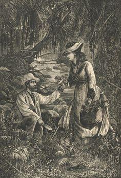 victorian fern postcard - fern collectors