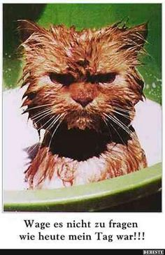 - Carmeletta Paulsen - My Ideas Animals And Pets, Funny Animals, Cute Animals, Garfield, Warrior Cats, Smiley, Picture Quotes, Funny Cats, Funny Birds
