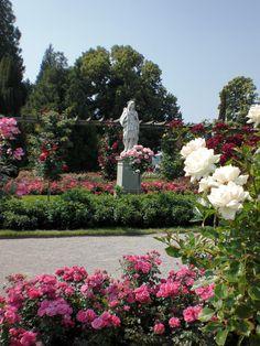 Bloemen op Mainau