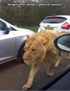 funny-pics-of-who-started-jumanji-lion-on-street.jpg - funny-pics-of-who-started-jumanji-lion-on-street. Humor Animal, Animal Memes, Funny Animals, Cute Animals, Animal Mashups, Animal Quotes, Funny Shit, Funny Cute, The Funny