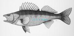 "Walleye Fish Drawing, 9"" x 16"" matted print"