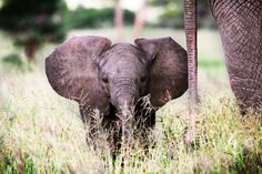 Has anyone gotten the impression yet that I ♥ baby elephants?