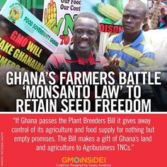 Ghana's government is desperate to pass a Plant Breeders Bill that would remove farmers' ancient 'seed freedom' to grow, retain, breed and develop crop varieties - while giving corporate breeders a blanket exemption from seed regulations. Now the farmers are fighting back. More here: http://www.theecologist.org/News/news_analysis/2605389/ghanas_farmers_battle_monsanto_law_to_retain_seed_freedom.html #GMOs #food #seeds #saveourseeds