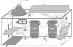 How to Create the Ideal Aquatic & Semi-Aquatic Turtle Habitats