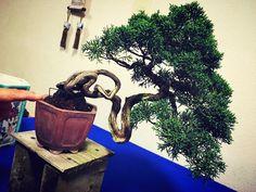 . Bonsai, Planter Pots, Japanese, Painting, Art, Art Background, Japanese Language, Painting Art, Kunst