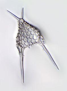 R-Dictyo-G.,Pacific Ocean, Picture of Radiolarian, Microscopic Nature,structures, protozoa, protozoan closeup plant life , Radiolaria microscope, Mikroskopie