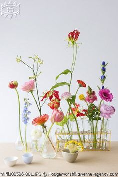 create a flower lab!